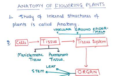You are currently viewing [PDF] Unacademy Biology Handwritten Notes PDF